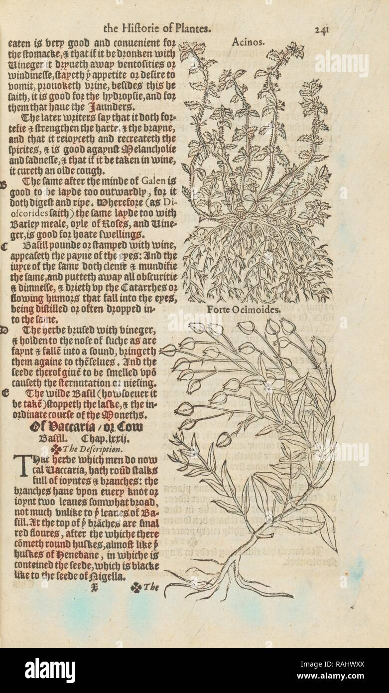 Illustrations and text on acinos and forte ocimoides, A nievve herball, or historie of plantes, Dodoens, Rembert reimagined - Stock Image
