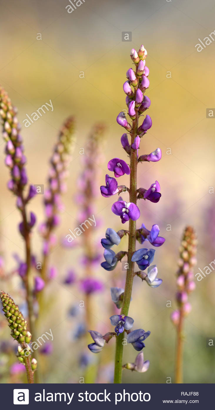 5da13e1345b2 Purple