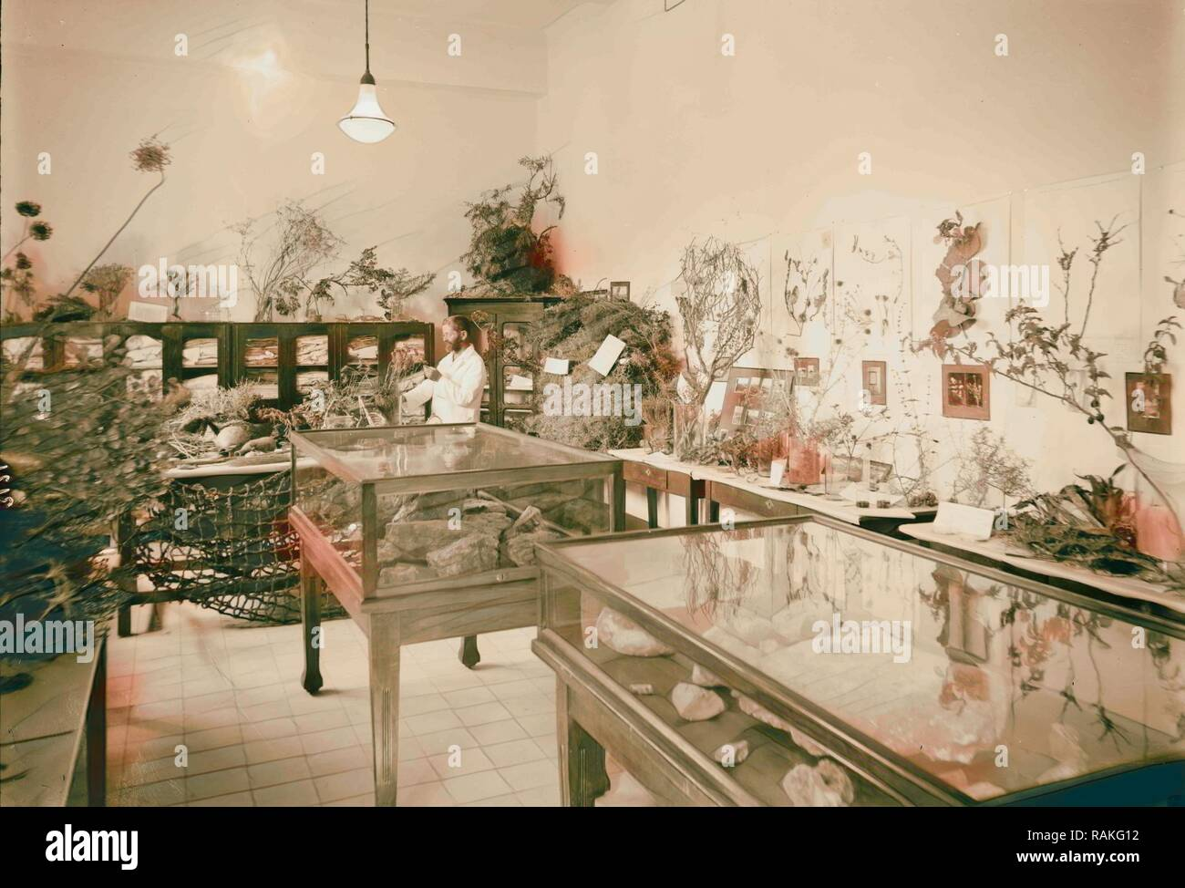 Zionist activities in Palestine. The Hebrew University. Biblical botanical section. 1925, Jerusalem. Reimagined - Stock Image