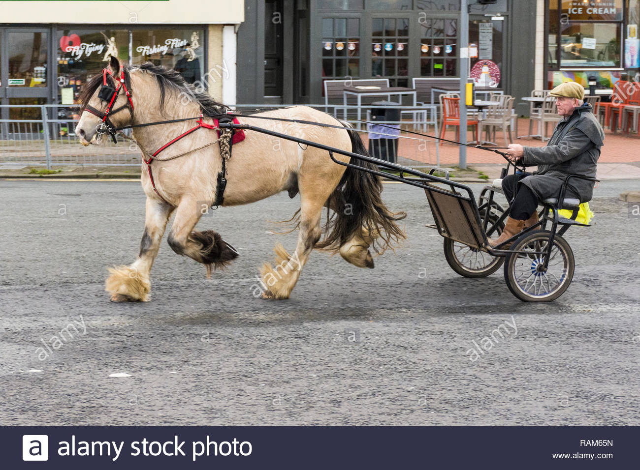 A horse pulling a sulky and its rider on Marine Road, Morecambe, Lancashire, England, UK - Stock Image