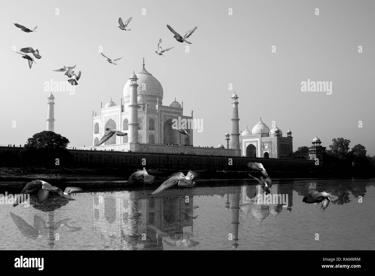 Taj Mahal reflected in Yamuna River view with bird flying across. Stock Photo