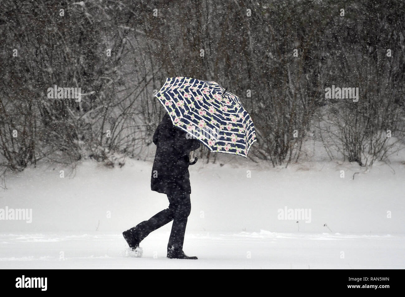 Munich Riem, Deutschland. 05th Jan, 2019. Weather Feature-A pedestrian with umbrella defies the snowdrifts and windbows on a snowy path in Riemer Park. Continuing snowfall on 05.01.2019, bring snow chaos, traffic chaos, winter in Bavaria. | usage worldwide Credit: dpa/Alamy Live News Credit: dpa picture alliance/Alamy Live News - Stock Image