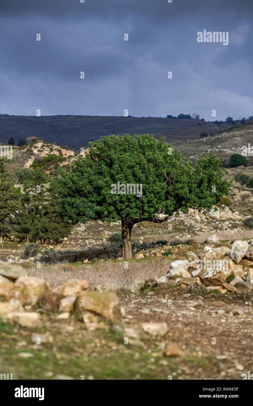 Tree, scenery, Akamas peninsula, Cyprus, Baum, Landschaft, Akamas-Halbinsel, Zypen Stock Photo