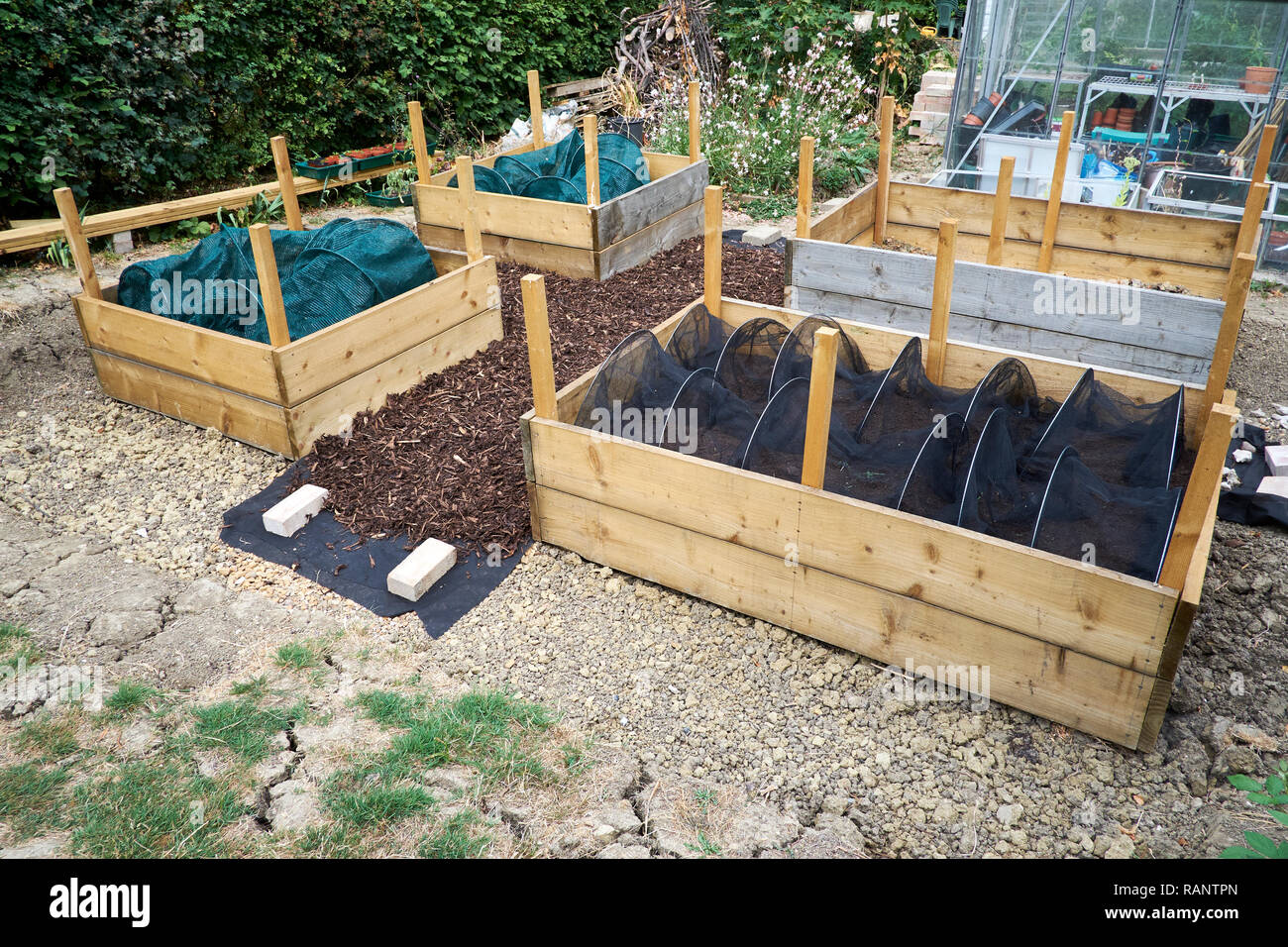 Picture of: Timber Raised Bed Construction In A Vegetable Garden Uk Stock Photo Alamy