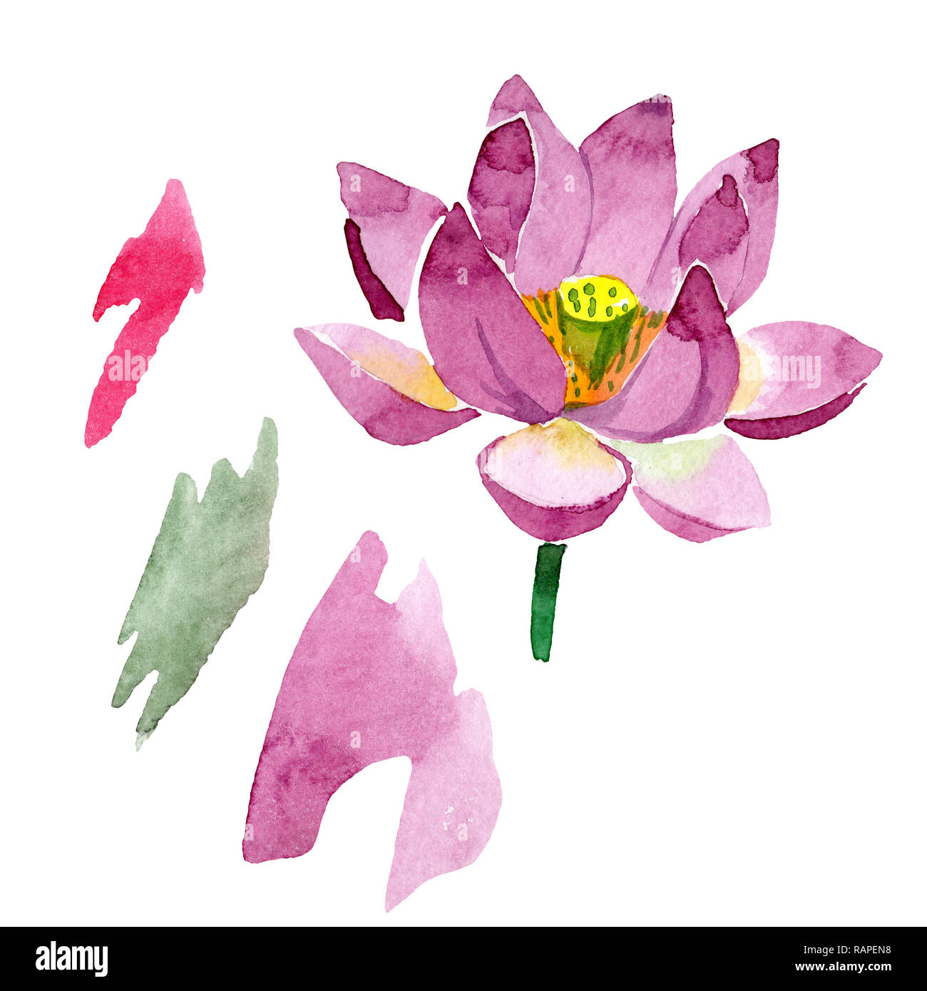 Purple Lotus Floral Botanical Flower Wild Spring Leaf Wildflower