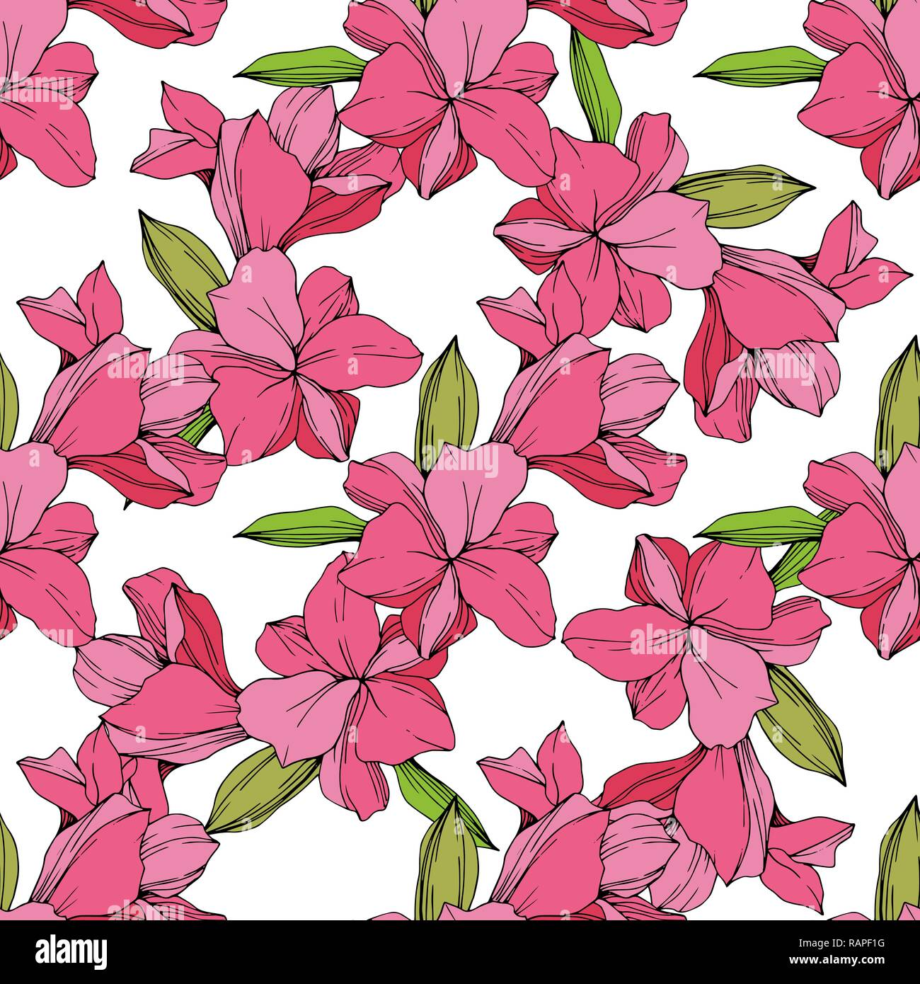 Vector Pink Orchid Floral Botanical Flower Engraved Ink