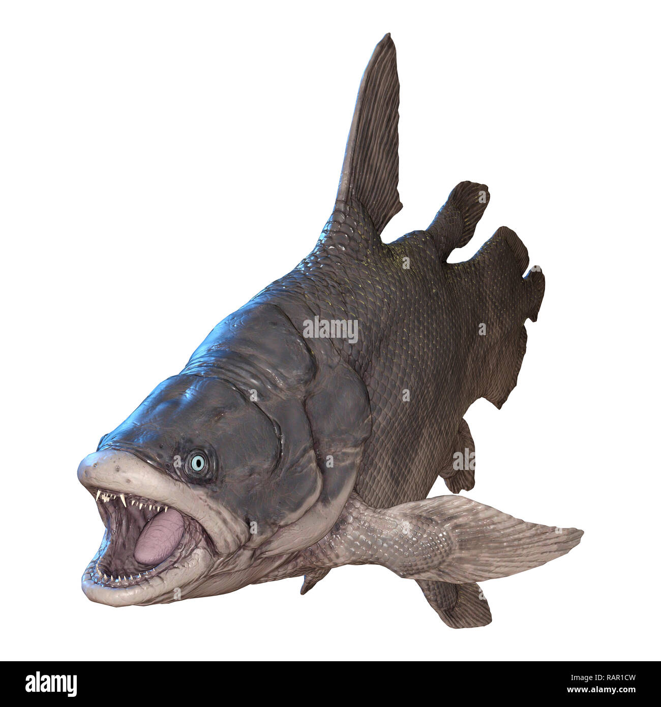 3D rendering of a Mawsonia, an extinct genus of prehistoric coelacanth fish isolated on white background - Stock Image
