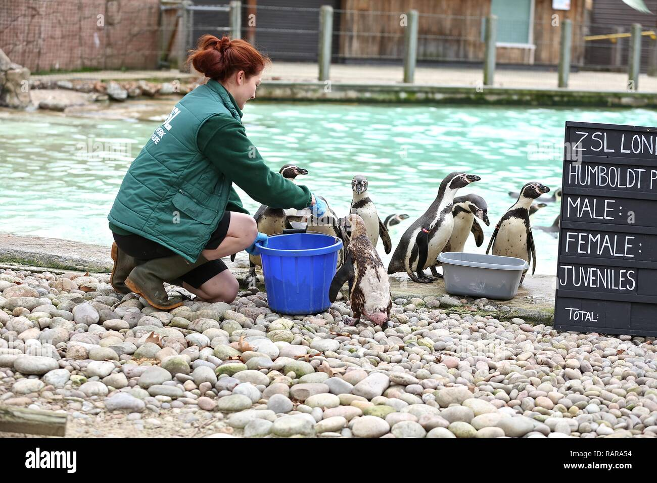 ZSL London Zoo's Annual Stocktake Thursday 3 January 2019 - Stock Image