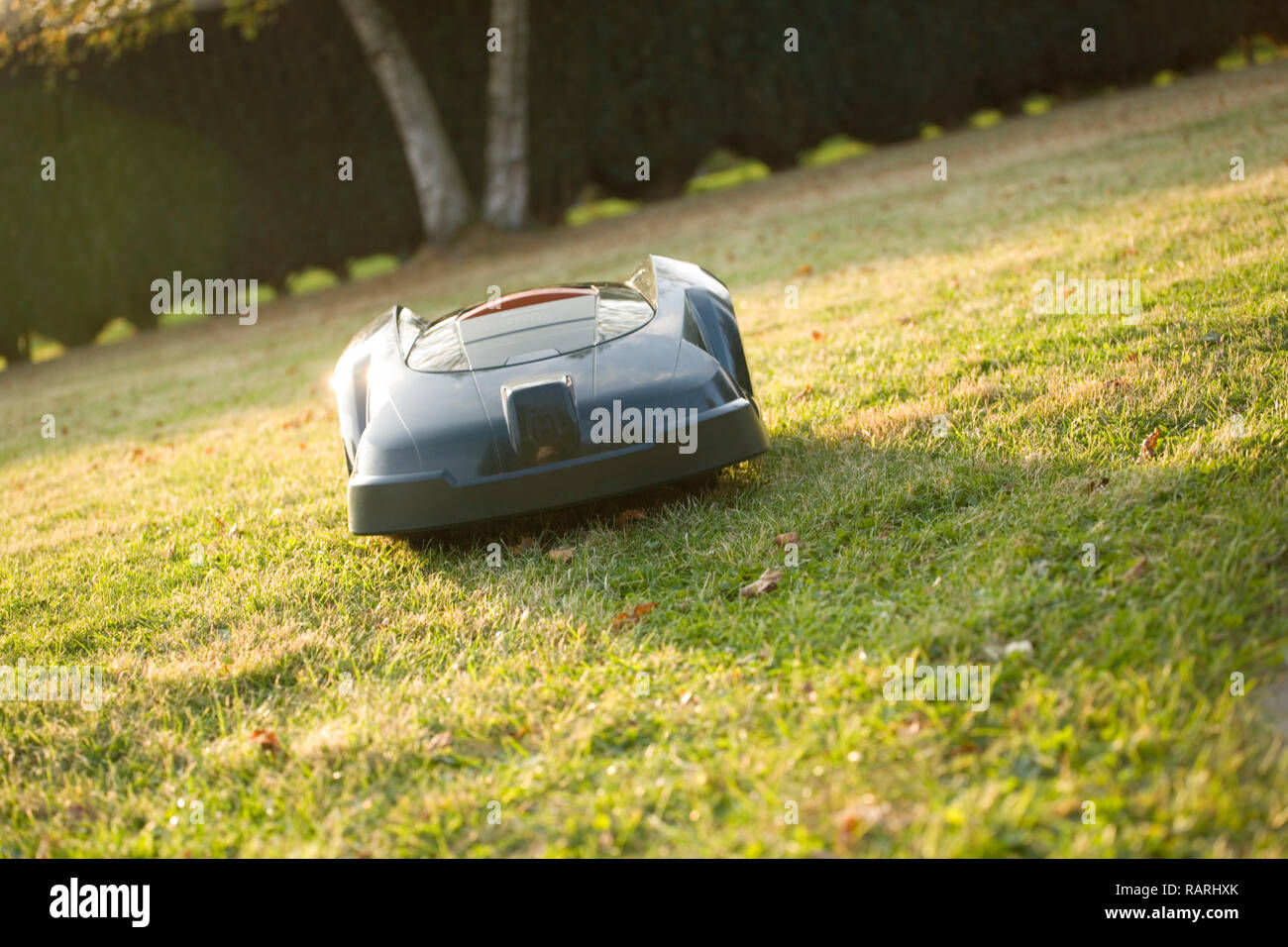 Automatic robot lawn mower cutting grass heading towards camera, angled shot - Stock Image