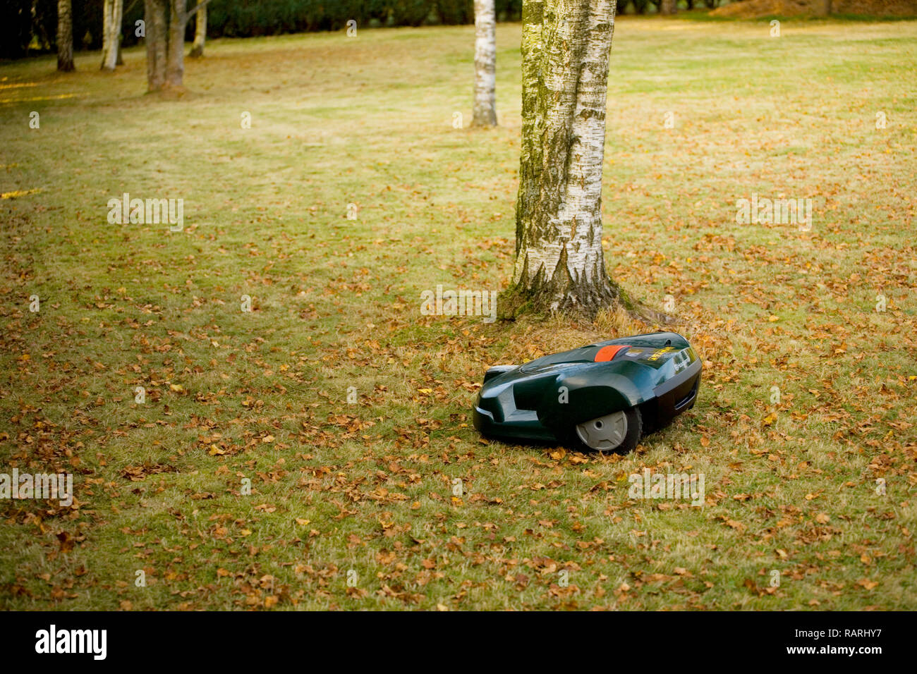 Automatic robot lawn mower cutting grass near trees and autumn leaves - Stock Image