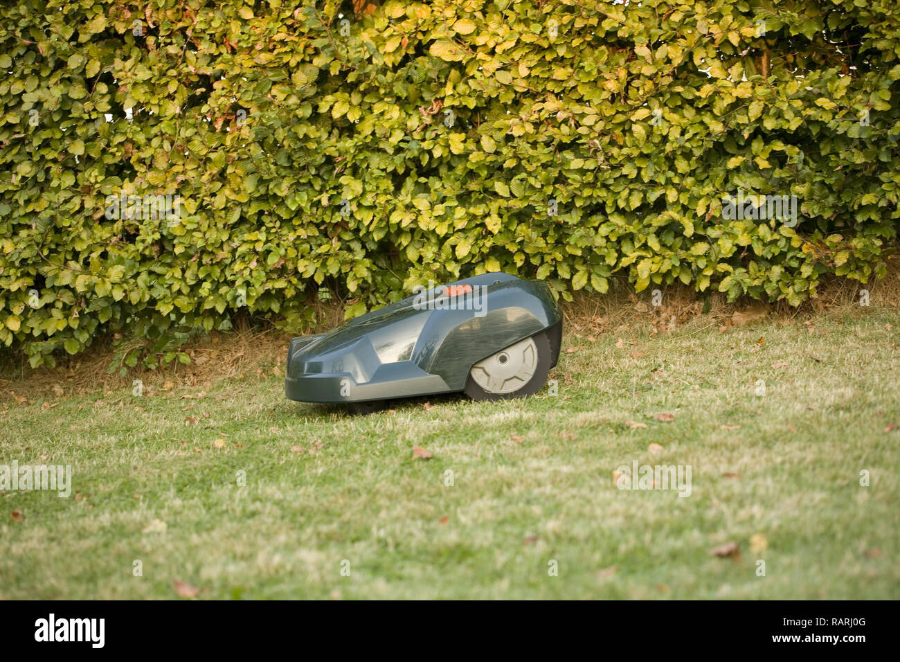 Green automatic robot lawnmower cutting grass running along the edges of a lawn by a hedge - Stock Image