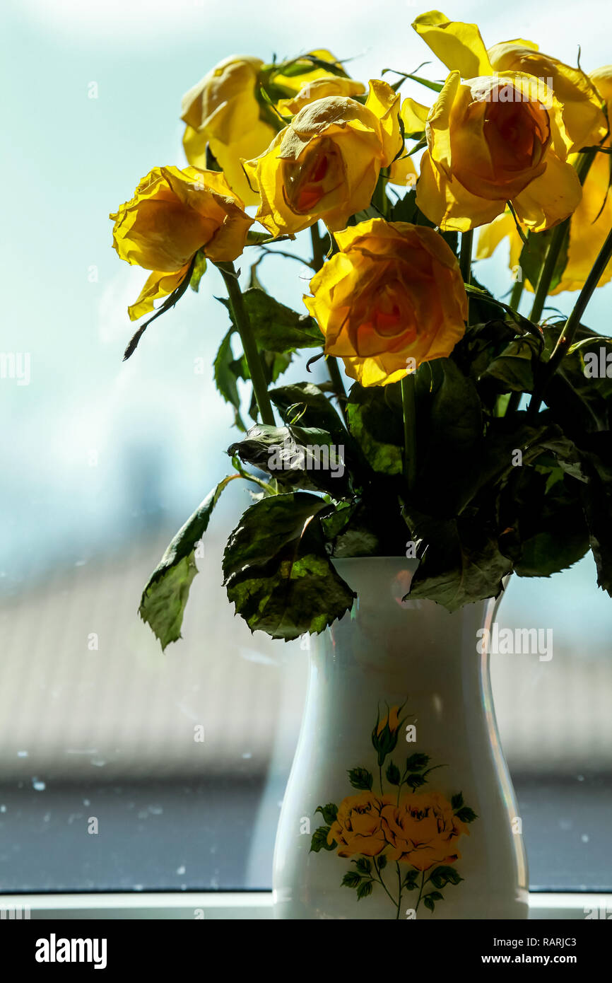 Wilted yellow roses in vase in window light. Vase with yellow roses. Flowers at the window. Yellow roses in vase at the window. Stock Photo