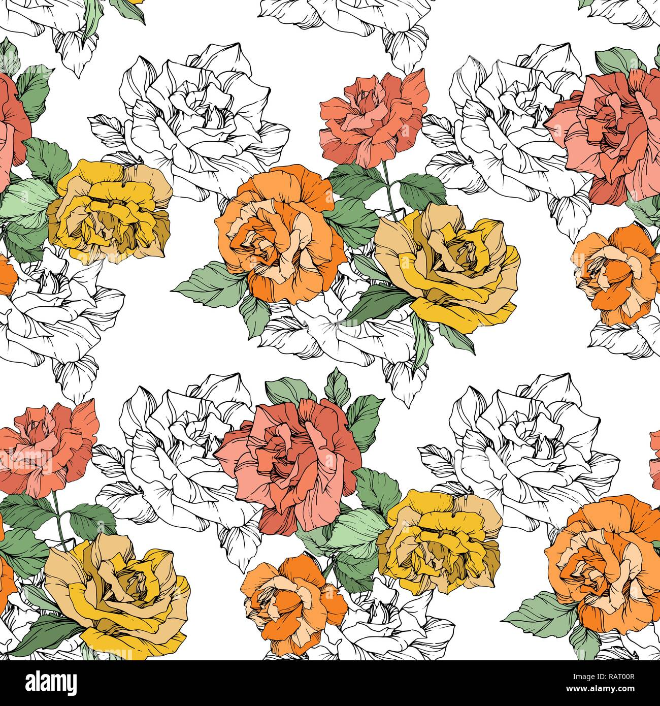 Vector Orange Yellow And Coral Rose Floral Botanical Flower