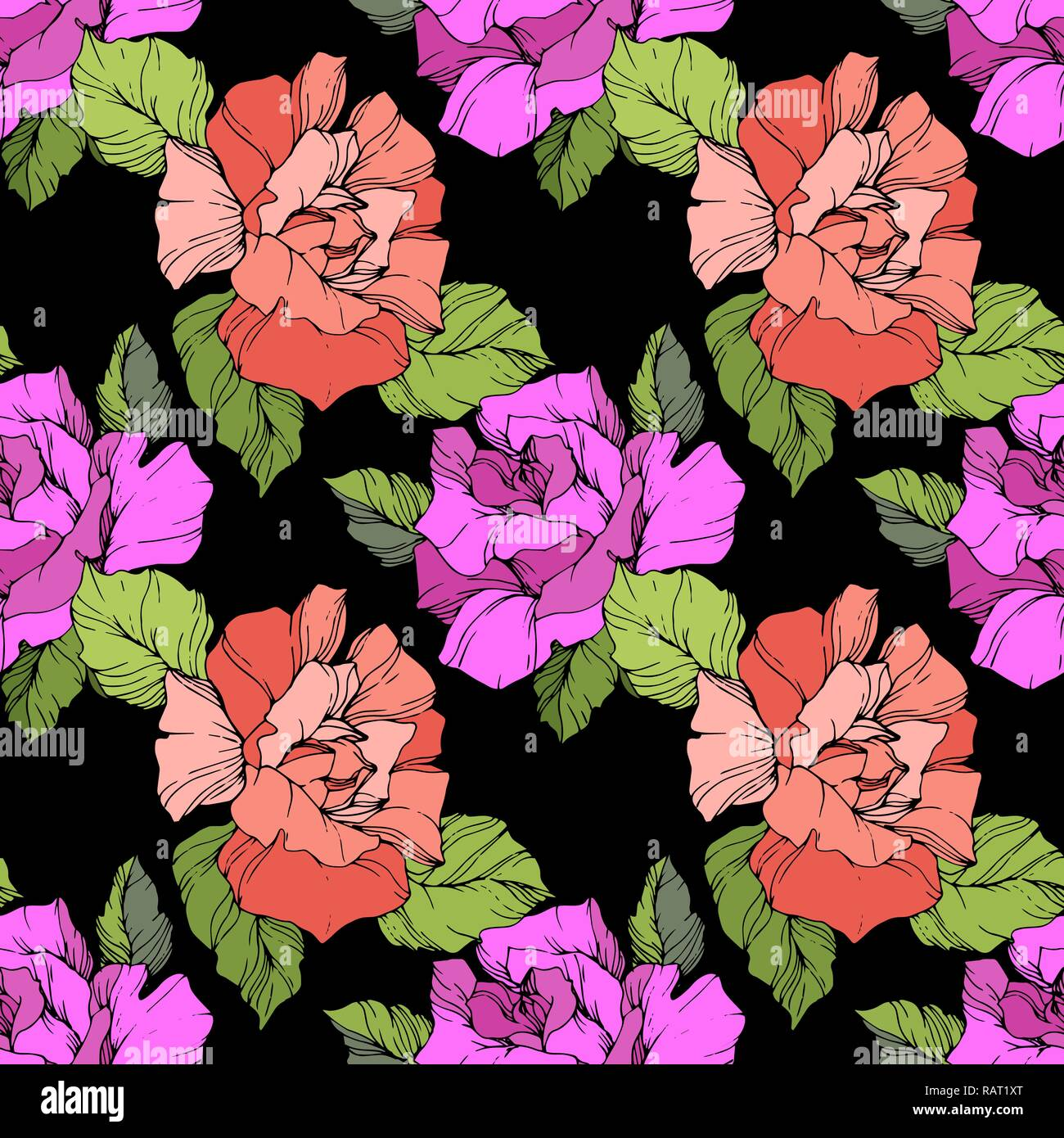Vector Coral And Purple Rose Floral Botanical Flower Engraved