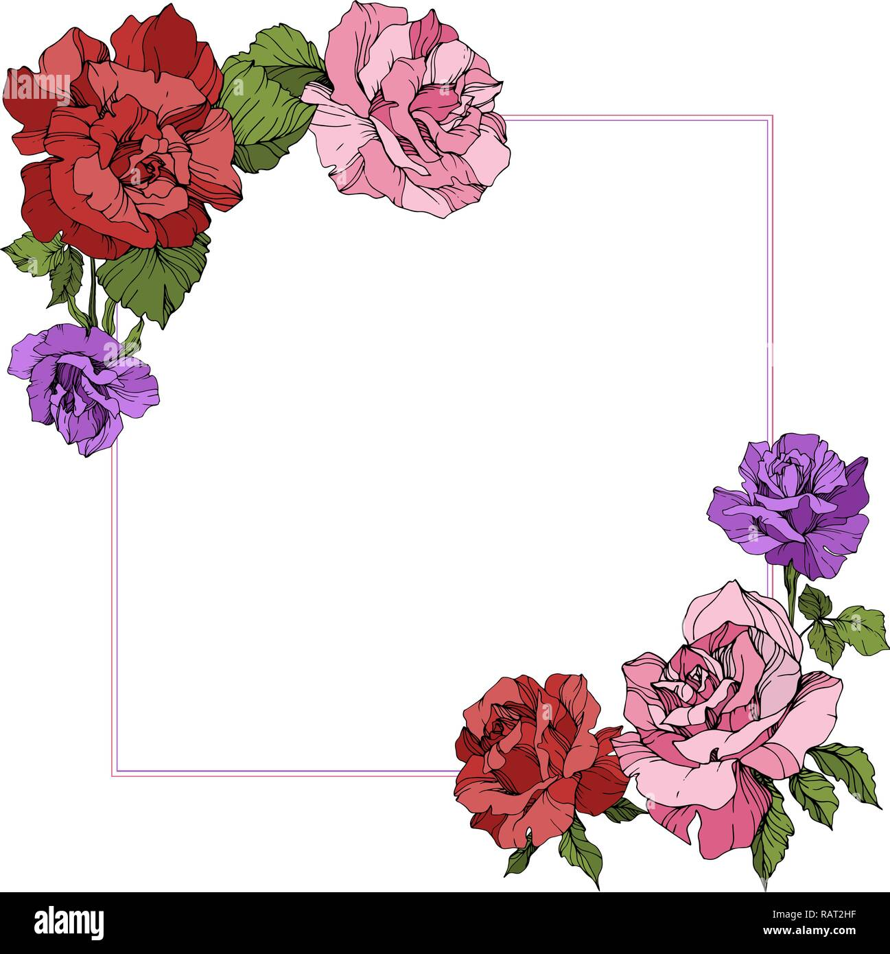 Vector Rose Floral Border Square On White Background Floral