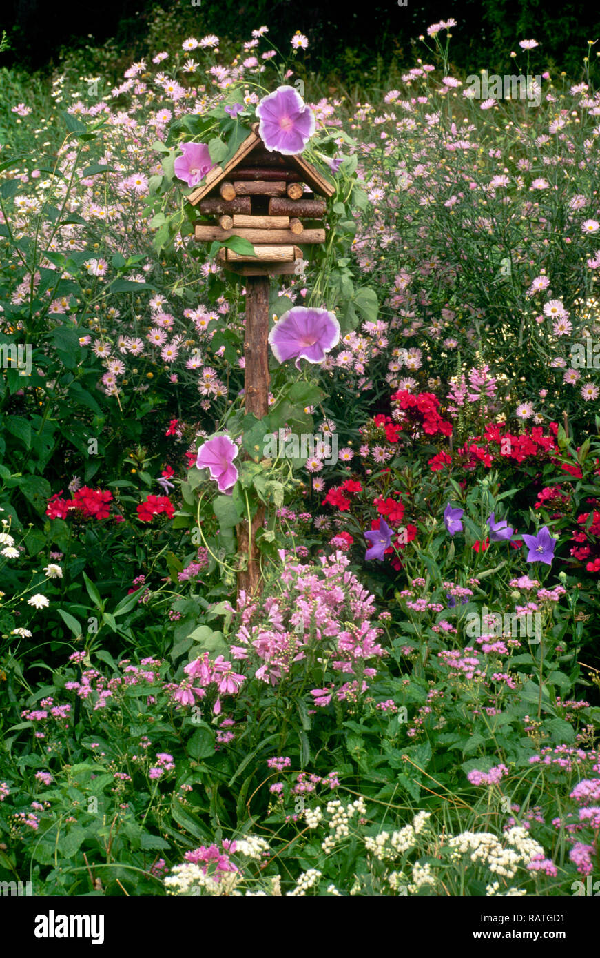 Fanciful log cabin birdhouse in blooming summer garden of morning glories, and gaudy flowers, Missouri USA - Stock Image