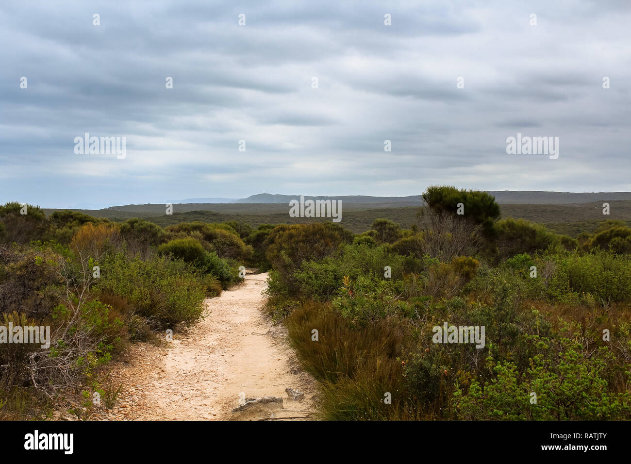 Dusty lonely path through dry vegetation with dramatic sky in Australian spring (Royal National Park, Australia) - Stock Image