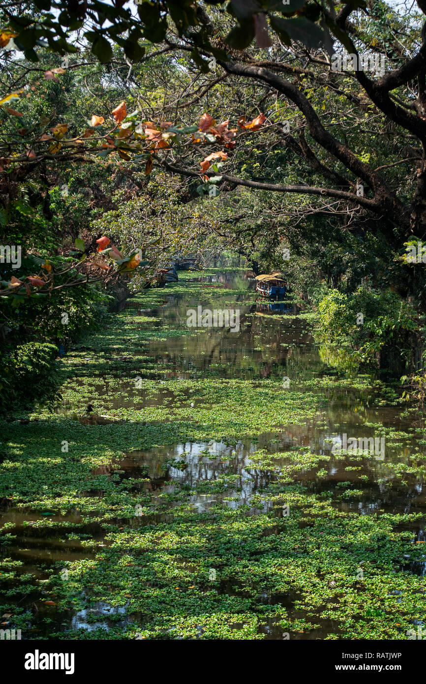 One of many over grown waterways of Alappuzha, Alleppey, India. - Stock Image