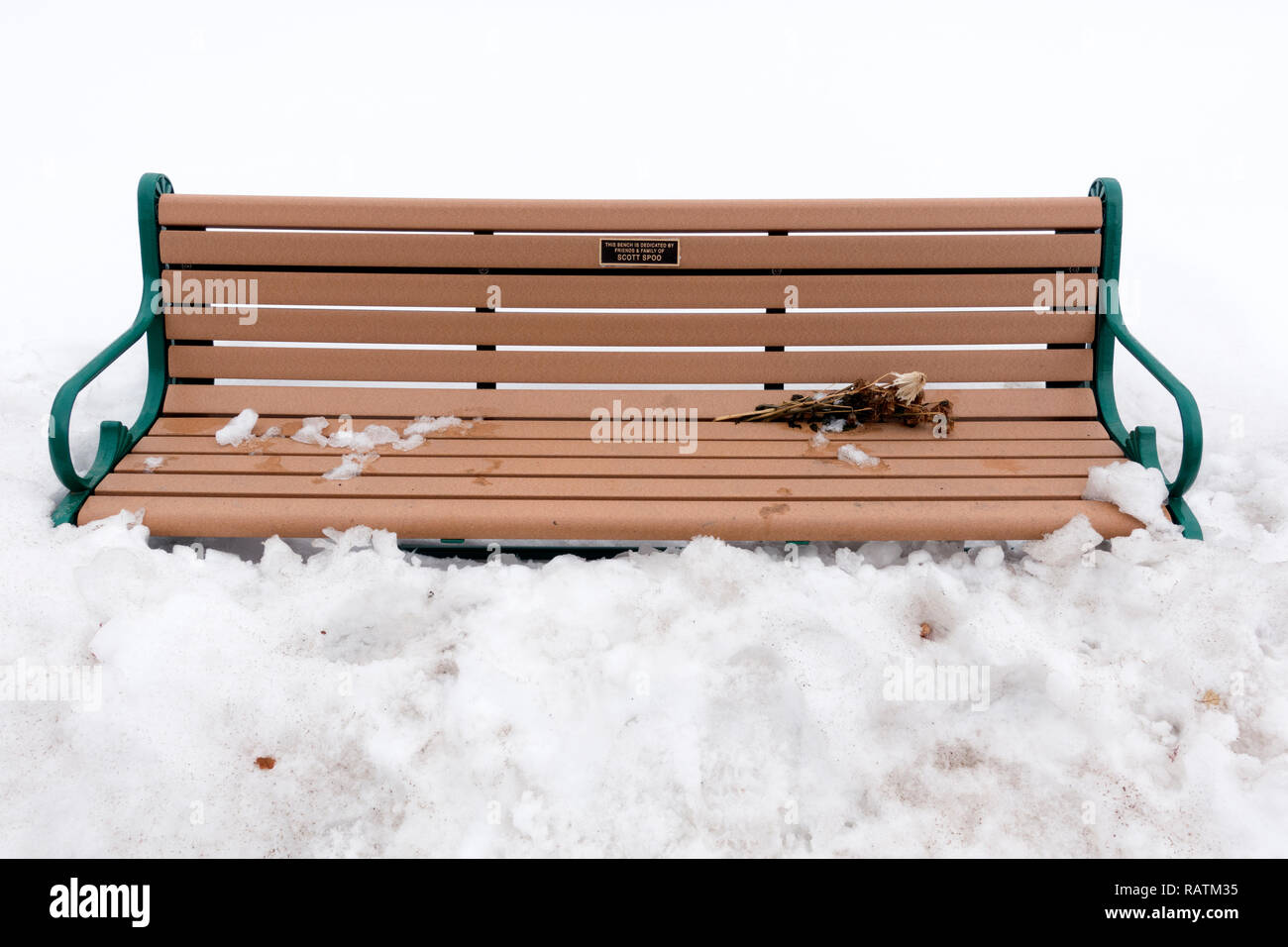 Bench buried in snow in memory of Scott Spoo a runner who was killed by distracted driver on N. Mississippi River Boulevard. St Paul Minnesota MN USA - Stock Image