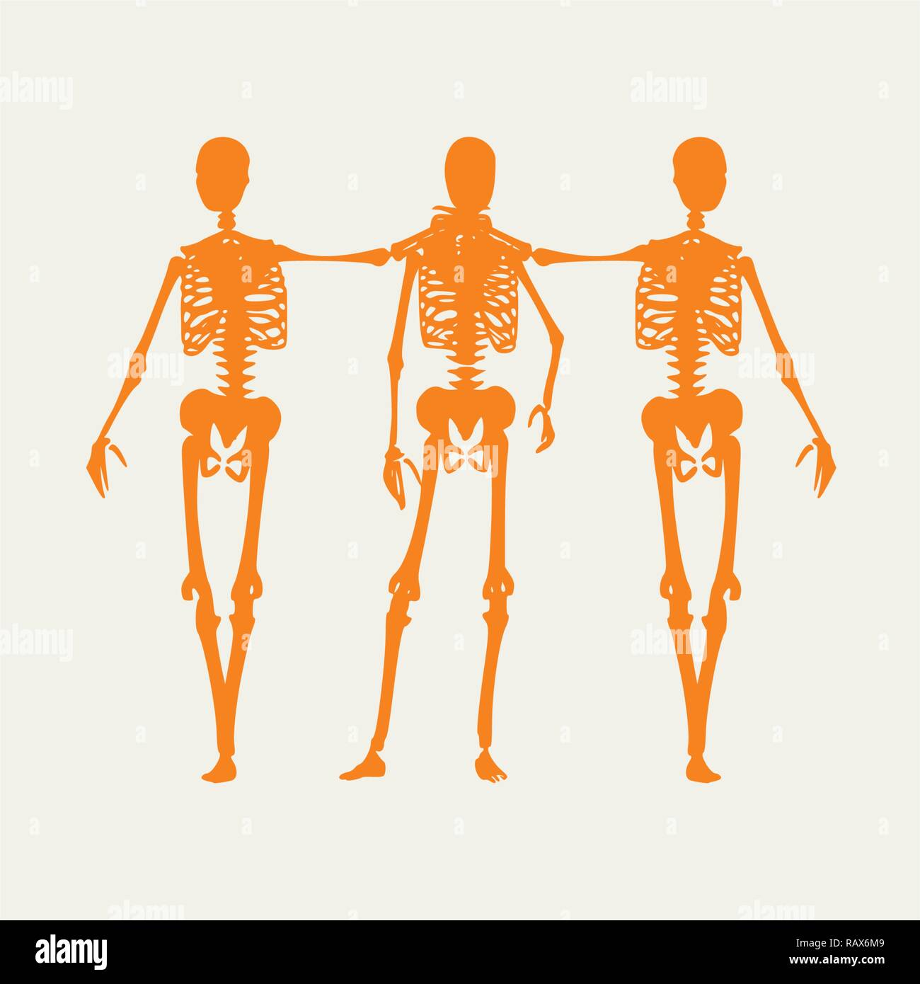 Halloween human skeleton - Stock Vector