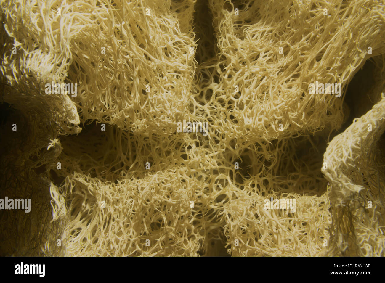 fiber shower,Close-up photography,dry plants - Stock Image
