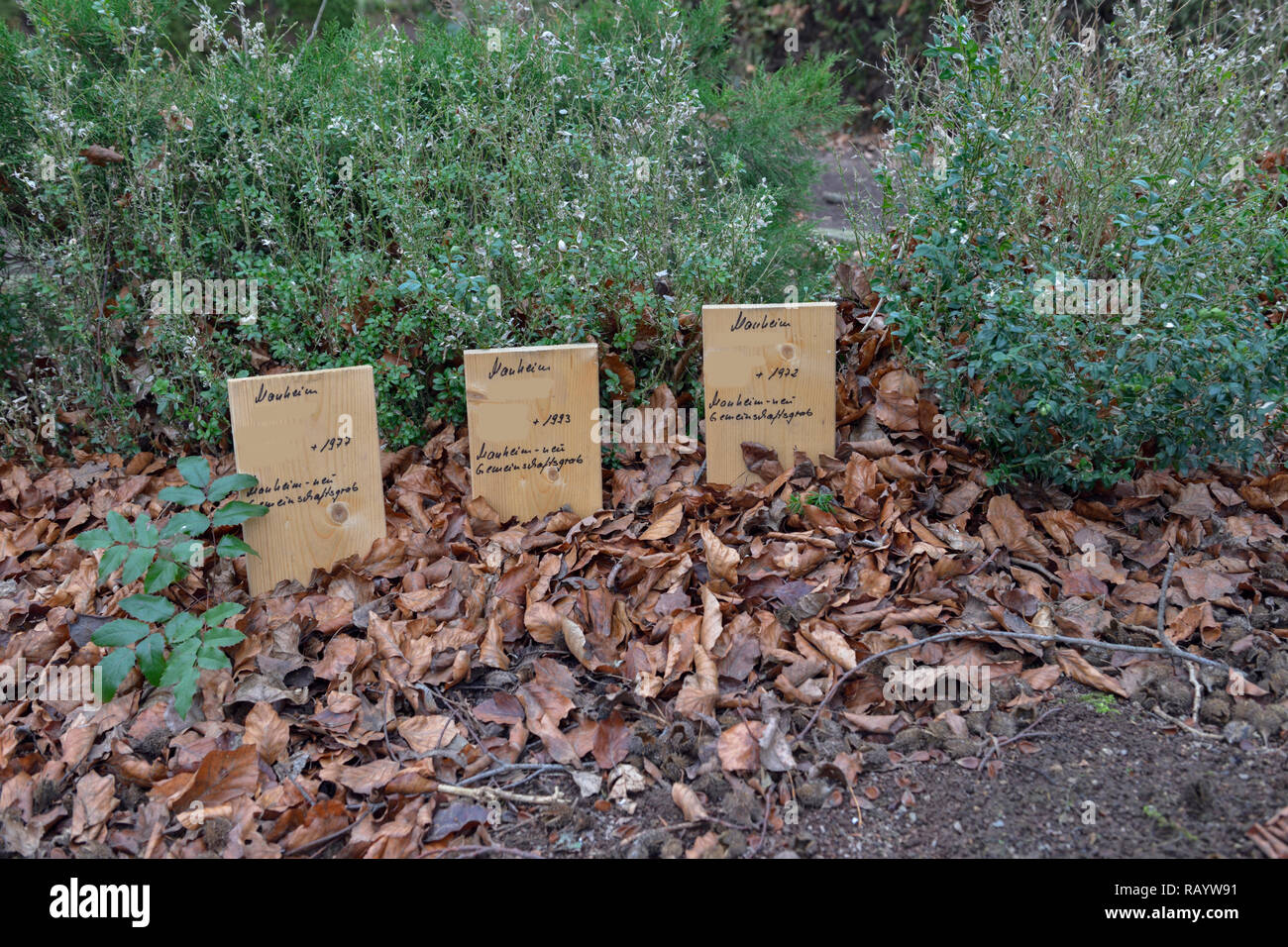 Kerpen-Manheim, Dezember 2018: In memory to the reburied graves of the old cemetery of Manheim to give place for the extension of the lignite surface  - Stock Image