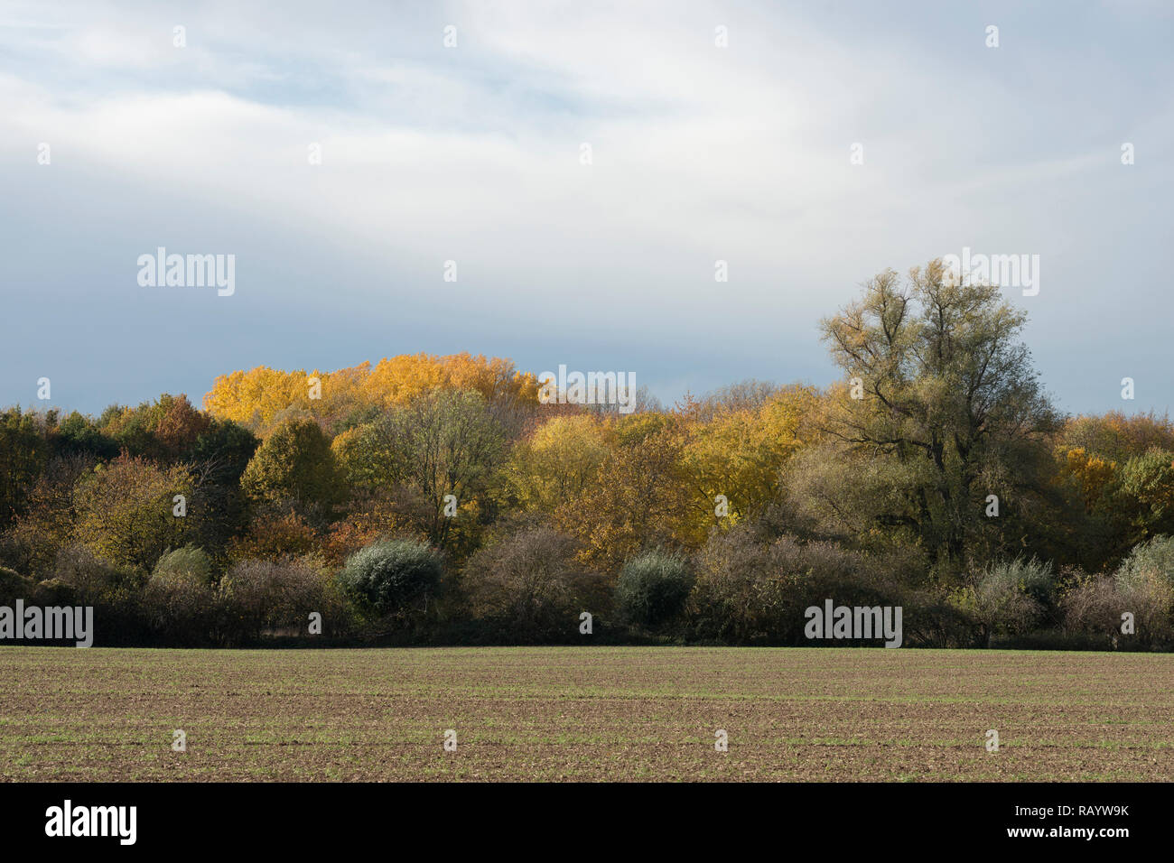 Brilliant fall colors along at the edge of a forest, autumn colored foliage in late afternoon, Europe. - Stock Image