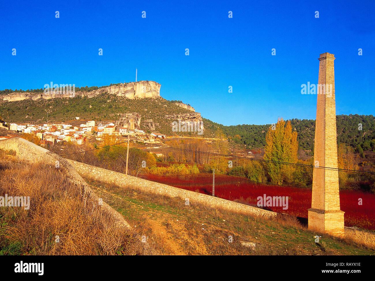 Wicker cultivation. Cañamares, Cuenca province, Castilla La Mancha, Spain. - Stock Image