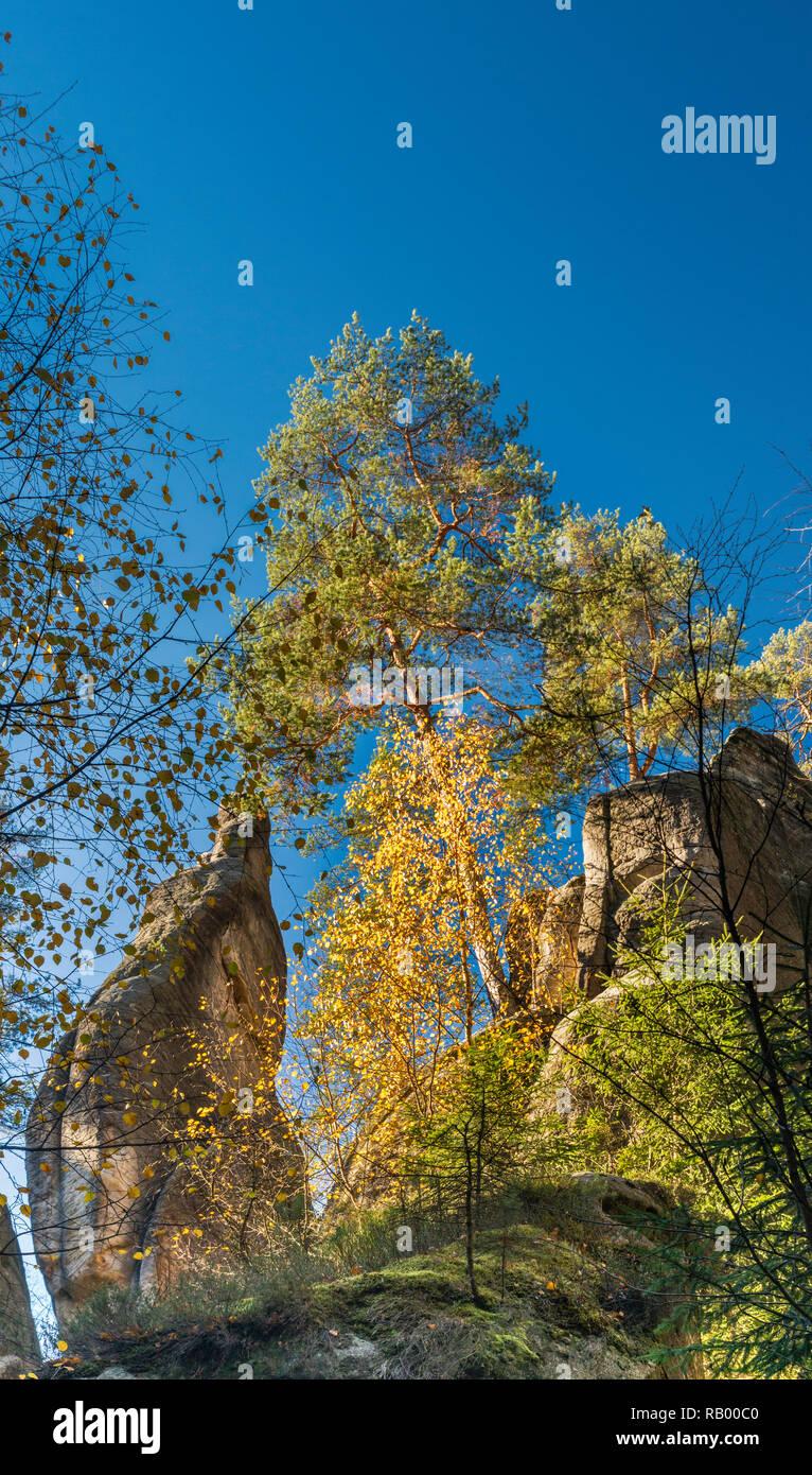 Trees, rock towers at Adršpach Rocks, Adršpach-Teplice Rocks National Nature Reserve, Central Sudetes, Bohemia, Czech Republic - Stock Image