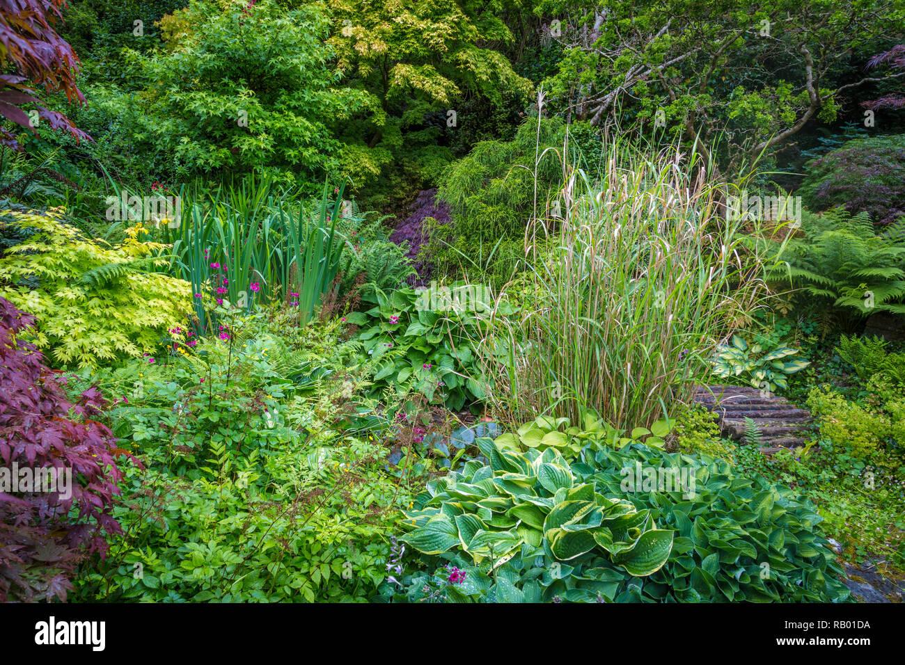 Natur in einem privaten Garten - Stock Image