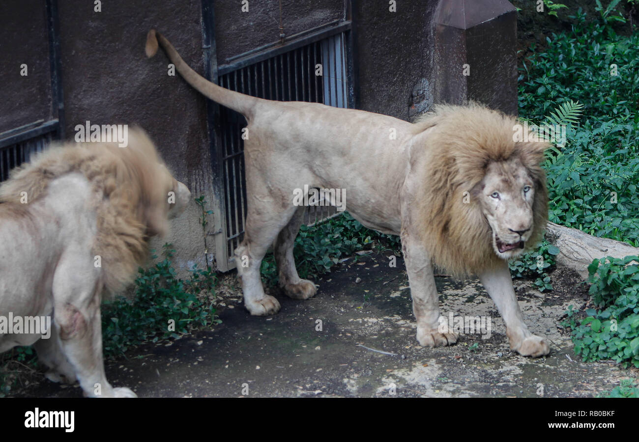 Secret Zoo Batu Malang High Resolution Stock Photography And Images Alamy