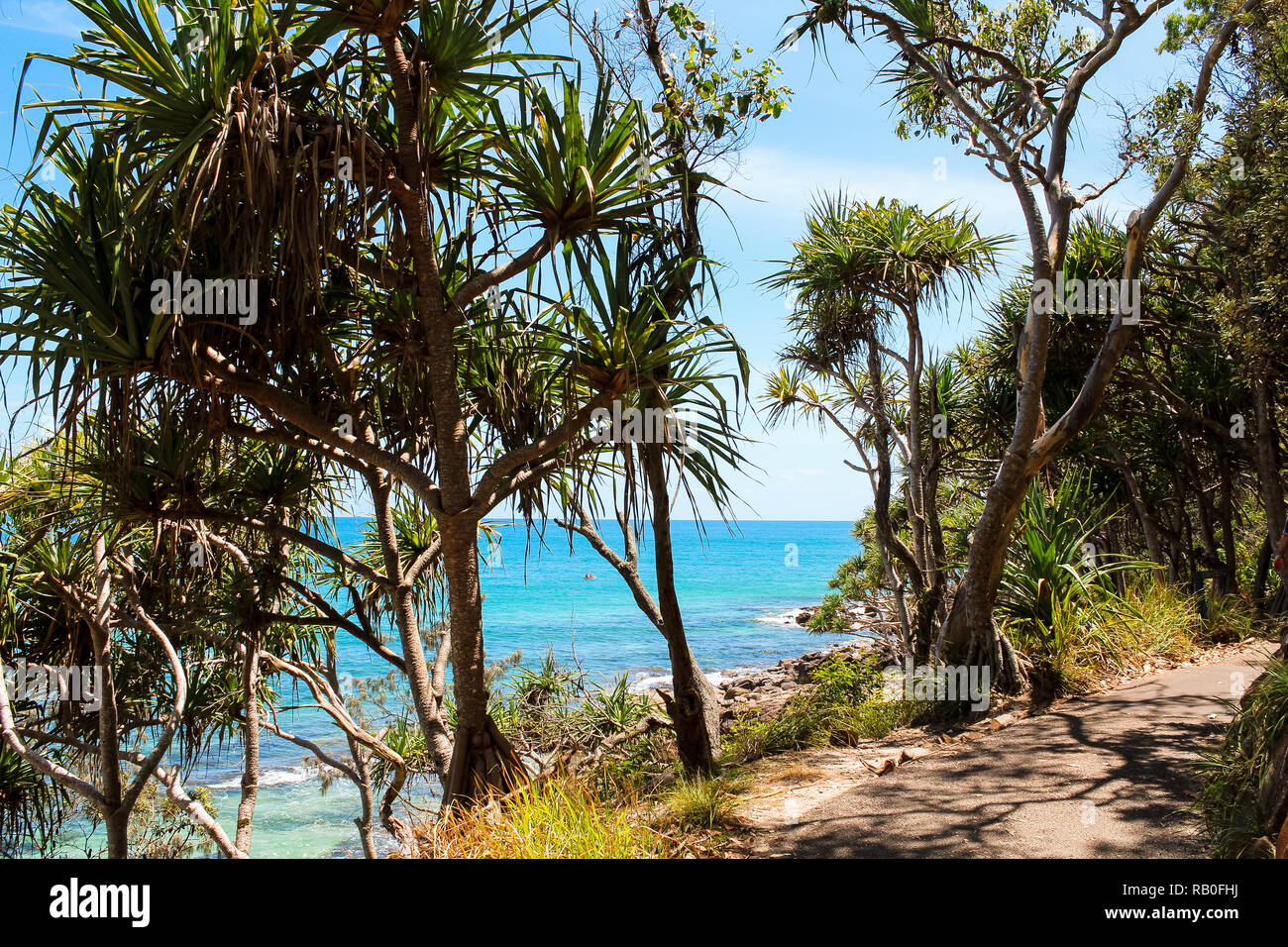 Tropical palm trees near a walking path in Noosa National Park with view onto the sea during a sunny summer day (Noosa Heads, Queensland, Australia) - Stock Image