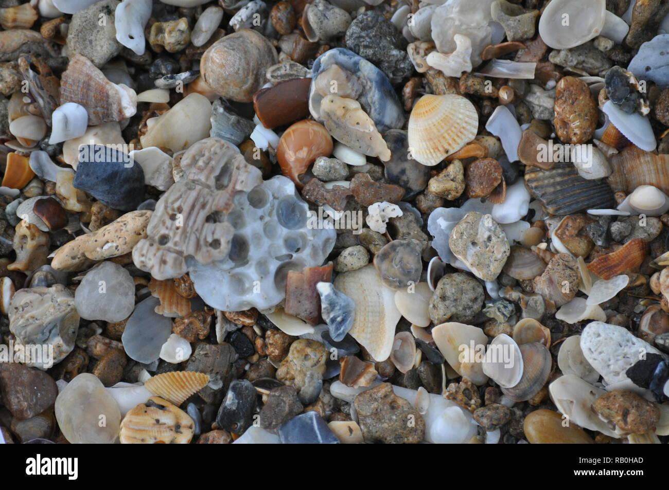 Beautiful Summer Macro Shells at the beach near sunset Topsail Beach North Carolina - Stock Image