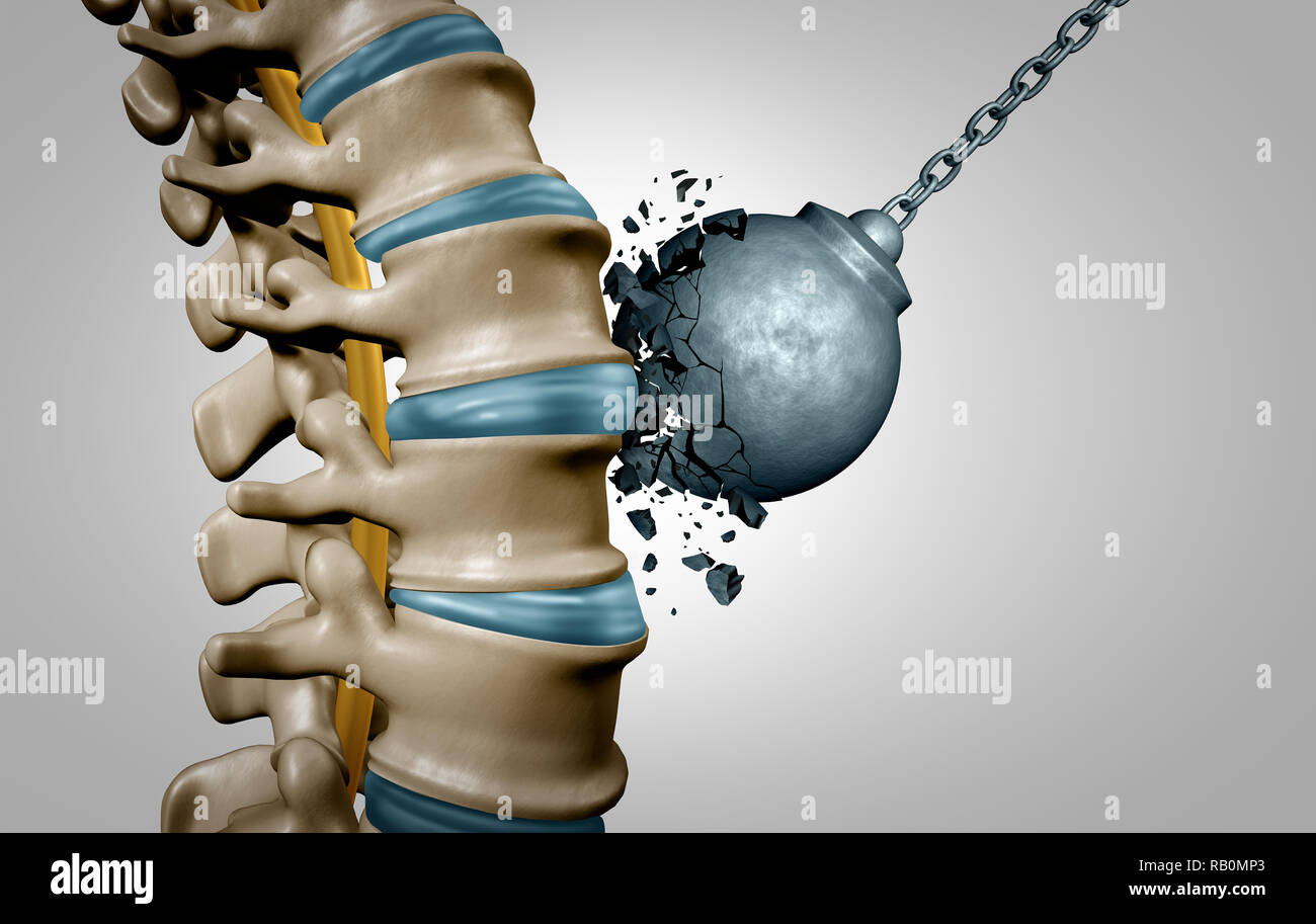 Strong Spine And Spinal Strength Human Anatomy Concept As Medical