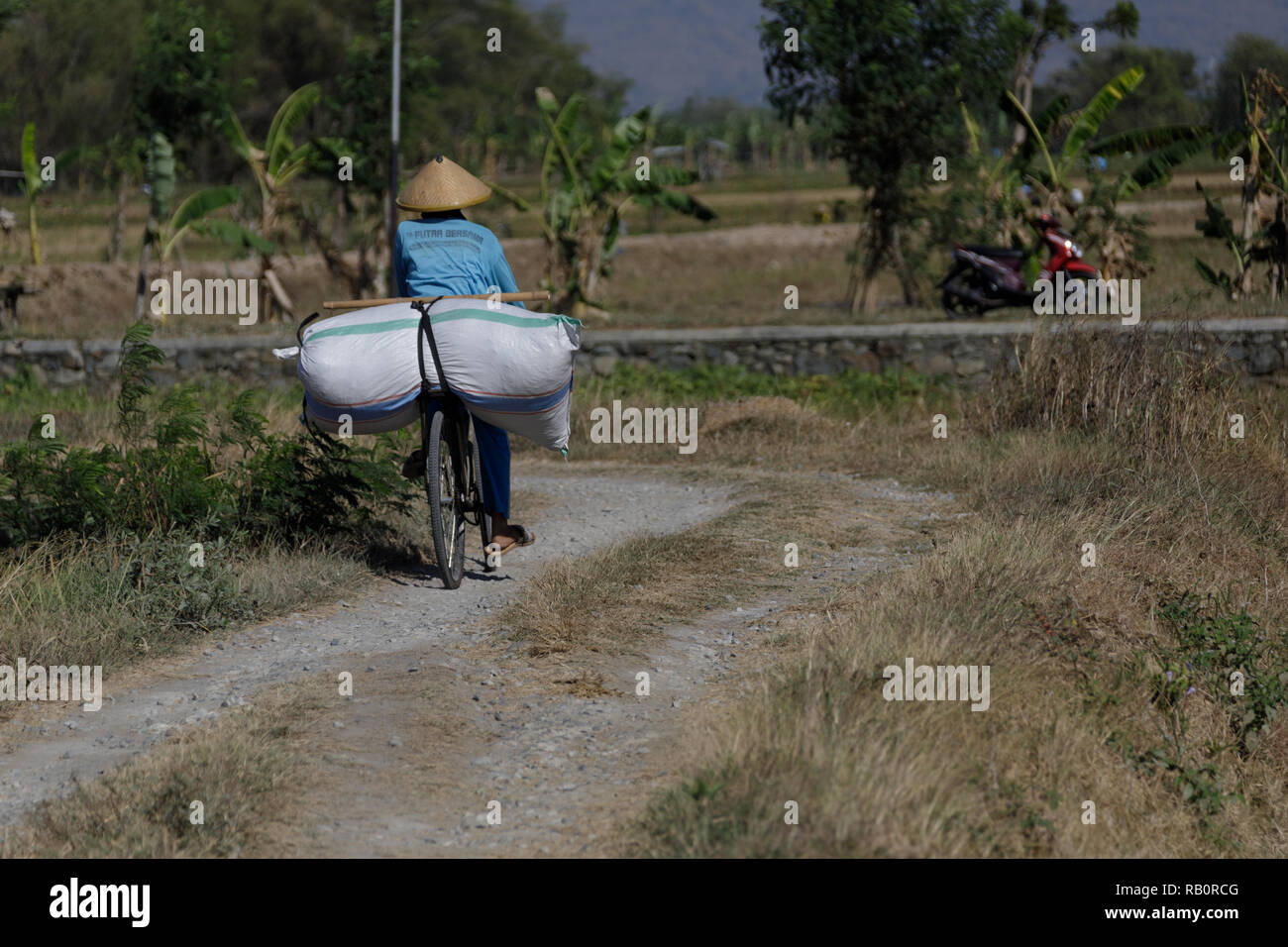 A local woman riding a bike and carrying a large bag of rice in Java, Indonesia. - Stock Image