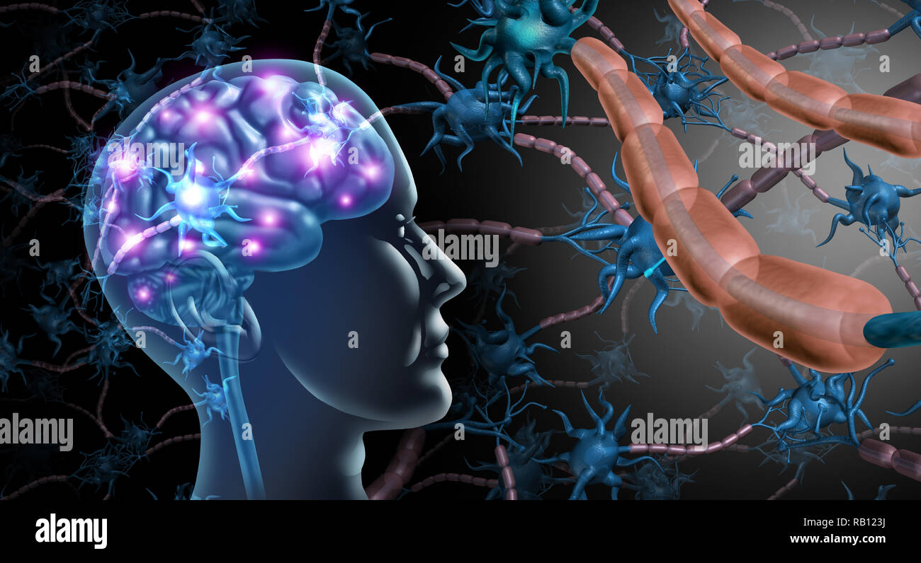 Brain nerve cells and nervous system anatomy concept as a human neurology and neuron function disorder symbol for multiple sclerosis or alzheimer. - Stock Image