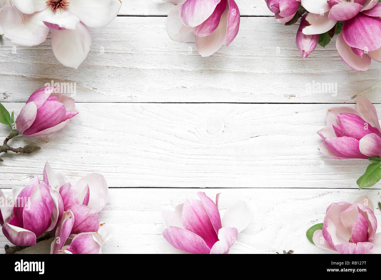 Creative layout made with pink magnolia flowers on white