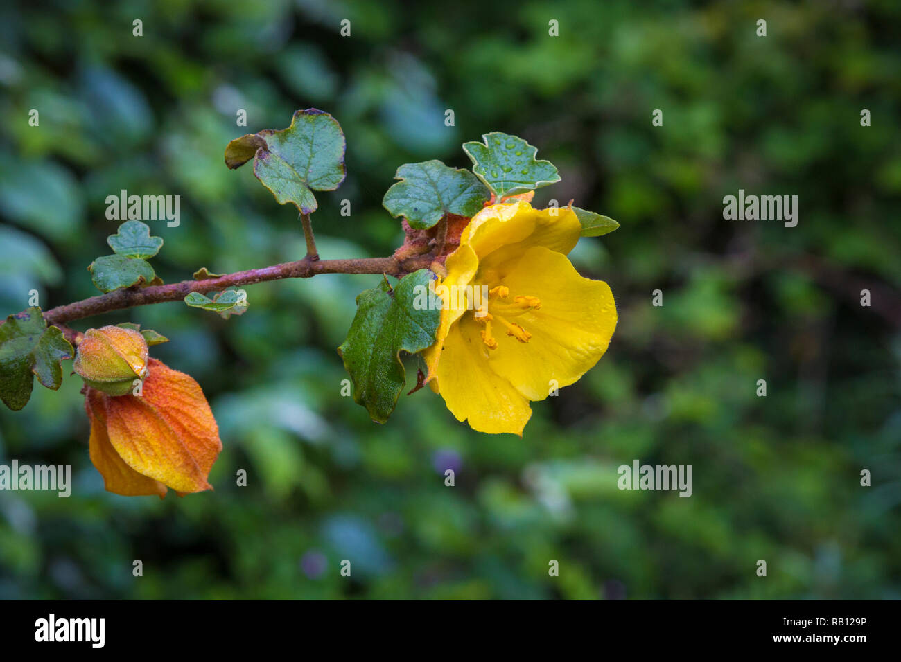 Gelbe Blume Stock Photos Gelbe Blume Stock Images Alamy