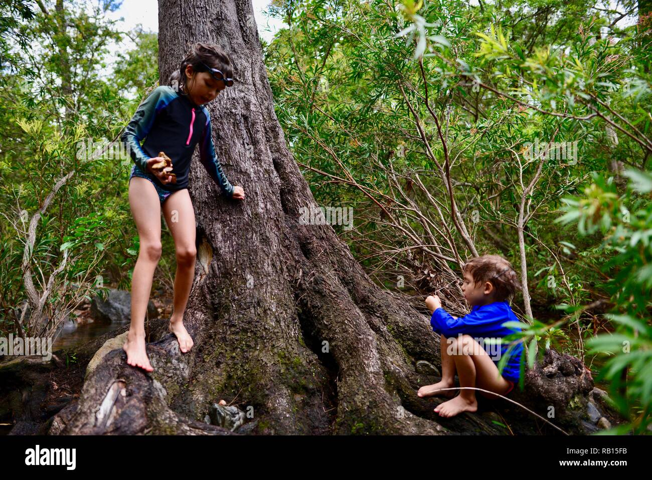 Children playing on a tree near a stream, A family swimming in a stream, Alligator Creek, Townsville, Qld, Australia Stock Photo