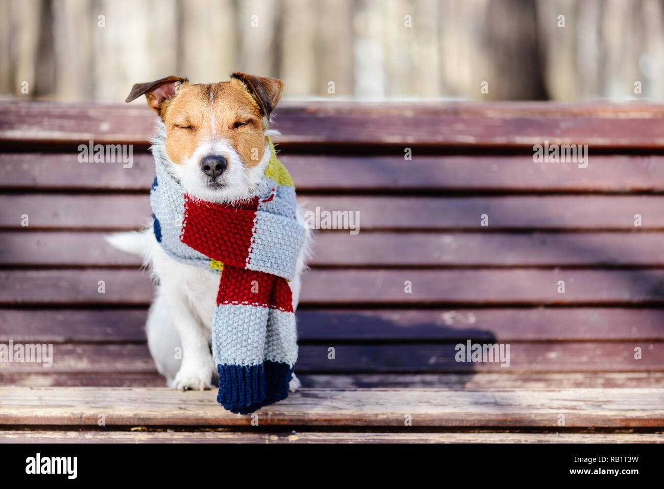 Hygge concept with happy dog wearing cozy warm scarf - Stock Image