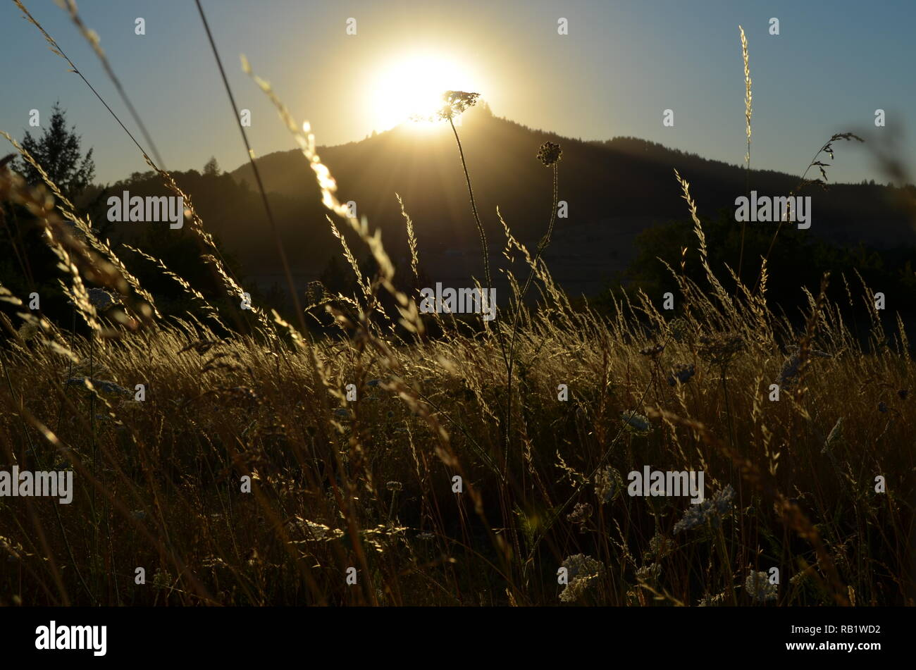 Summer grasses glowing in setting sun over butte. Stock Photo