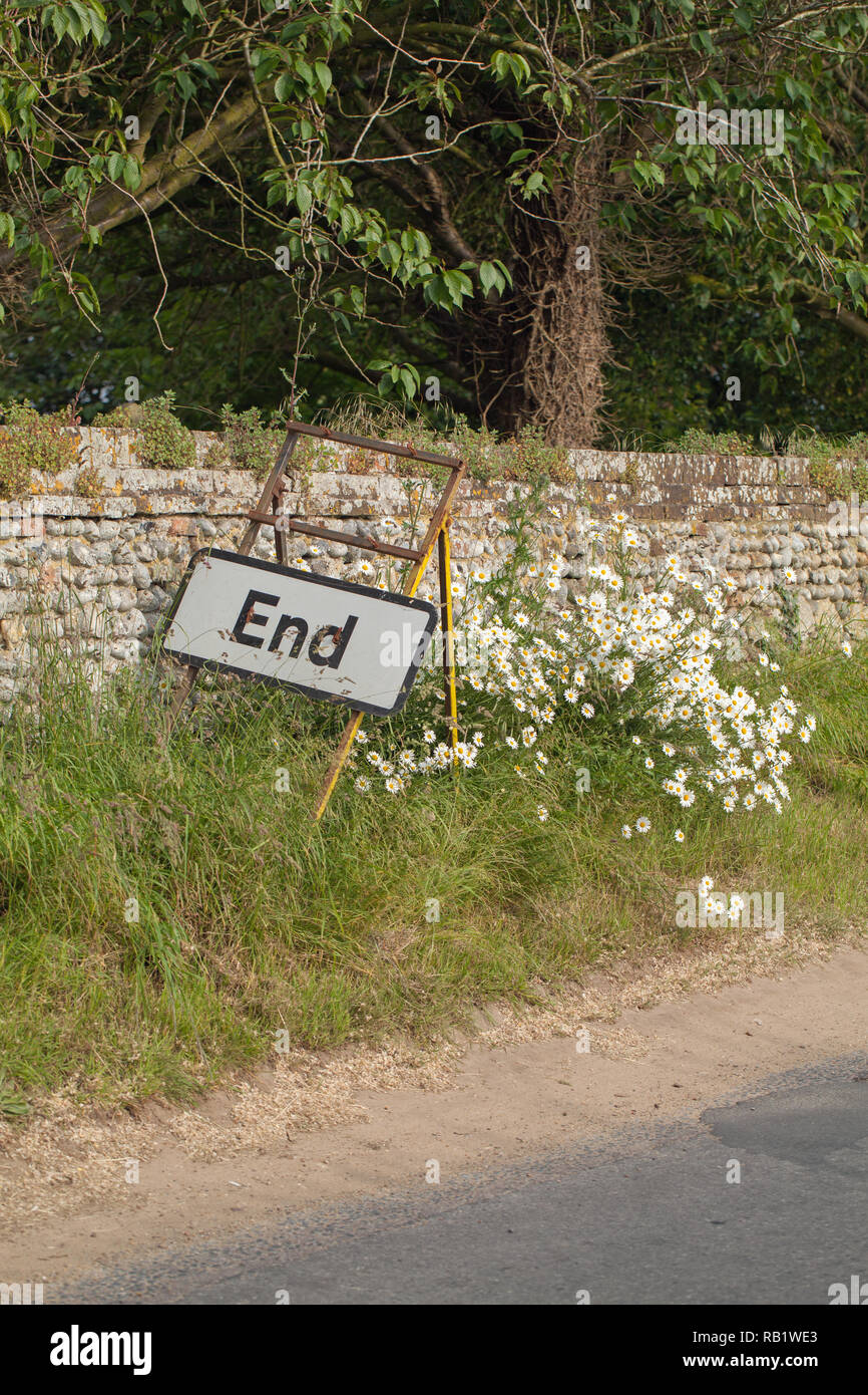 'End', Road sign, placed amongst a rural roadside bank of Ox-eye Daisies (Leucanthemum vulgare), with a flint stone wall background. Ingham, Norfolk. East Anglia. England. The UK. - Stock Image
