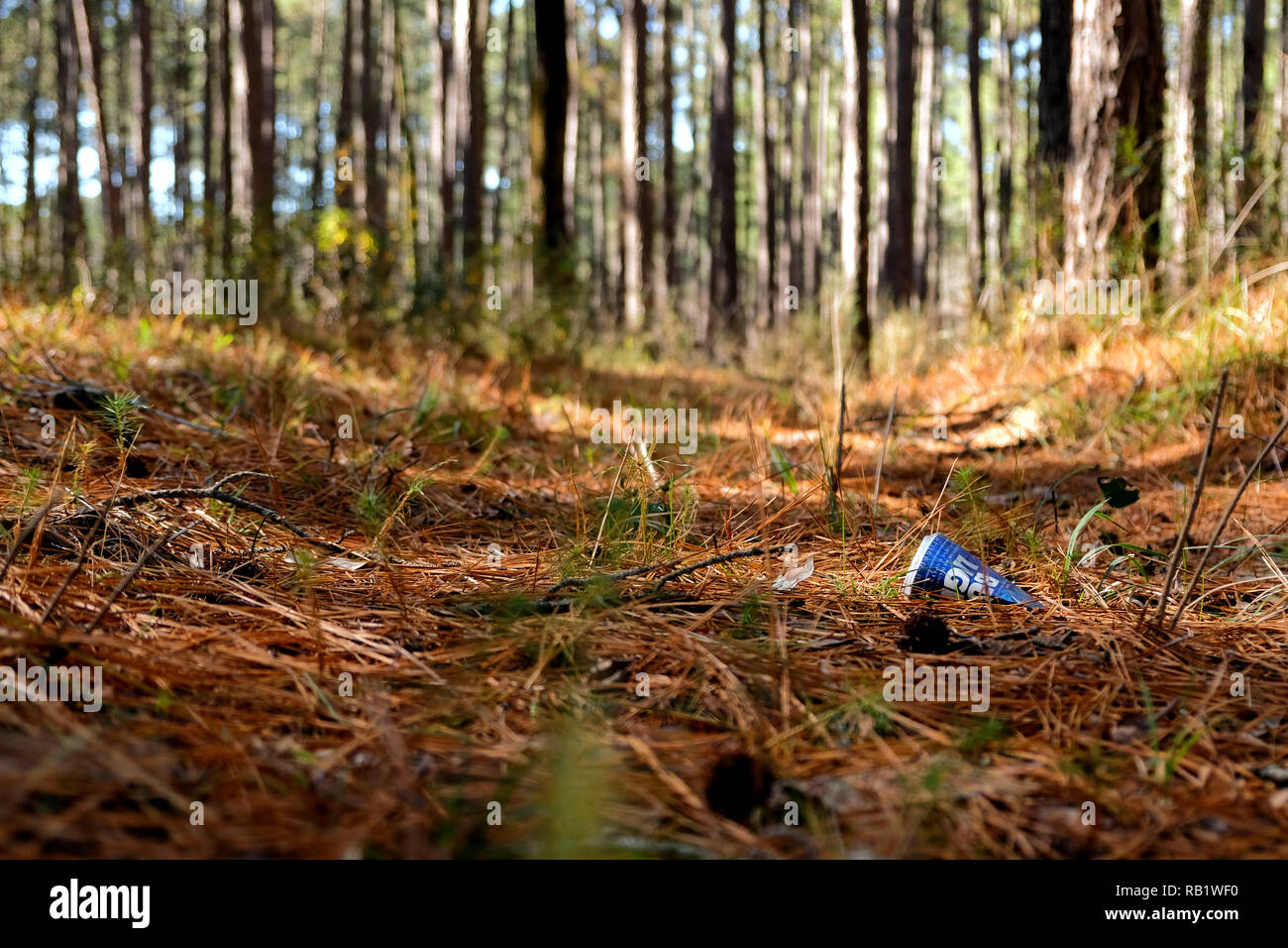 Empty beer can thrown on the ground amid pine needles at the Sam Houston National Forest in Texas; aluminum pollution; trash in nature. - Stock Image