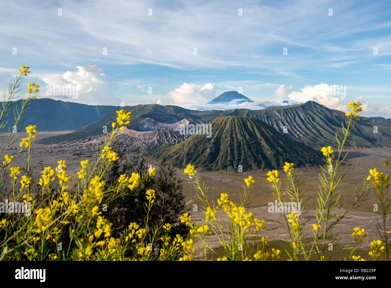 Bromo mountain with yellow flower on foreground - Stock Image