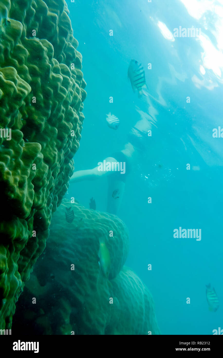 underwater view of woman swimming over reef, tropical waters Stock Photo