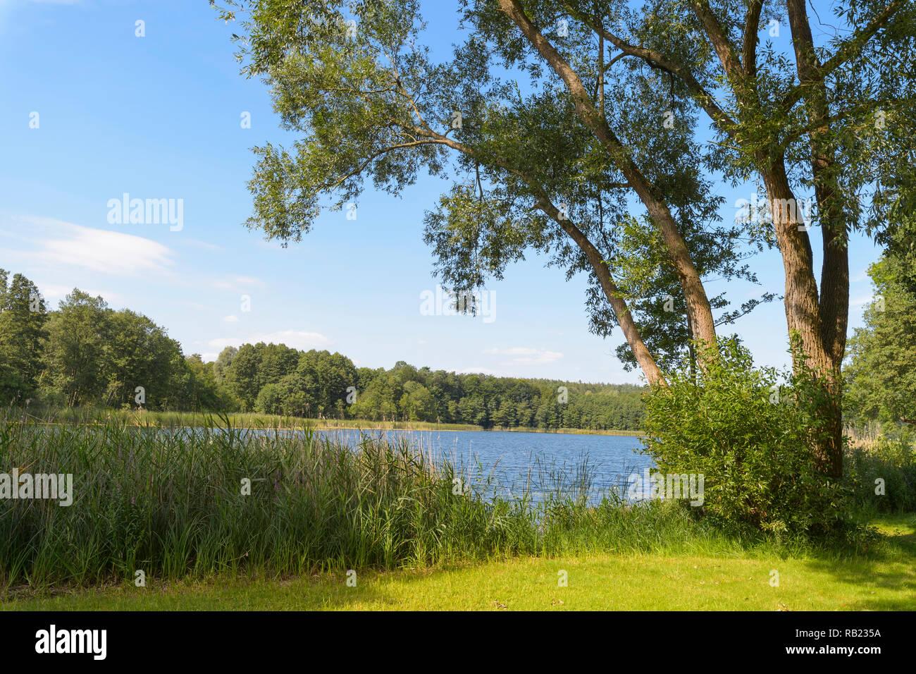 Lake Dagosee in summer, Neuglobsow, Rheinsberg, Ruppiner Land, Brandenburg, Germany - Stock Image