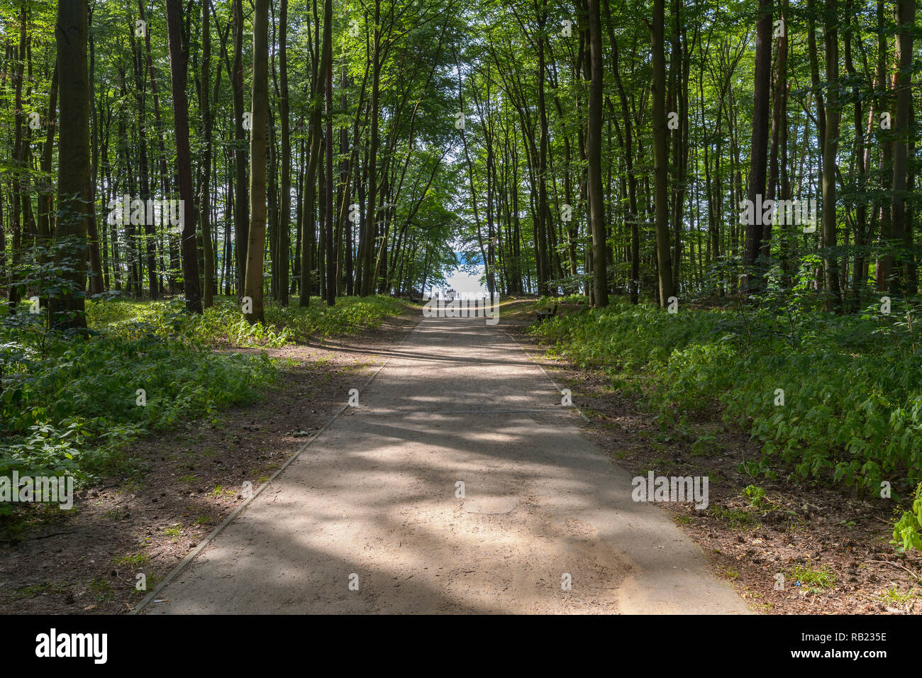 Road through forest to the lake, Lake Großer Stechlinsee, Neuglobsow, Rheinsberg, Ruppiner Land, Brandenburg, Germany - Stock Image