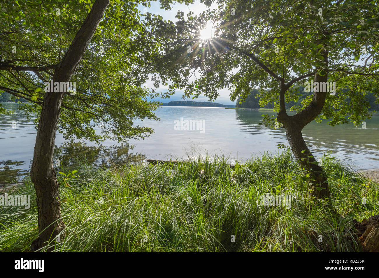 Lakeside in summer, Lake Großer Stechlinsee, Neuglobsow, Rheinsberg, Ruppiner Land, Brandenburg, Germany - Stock Image