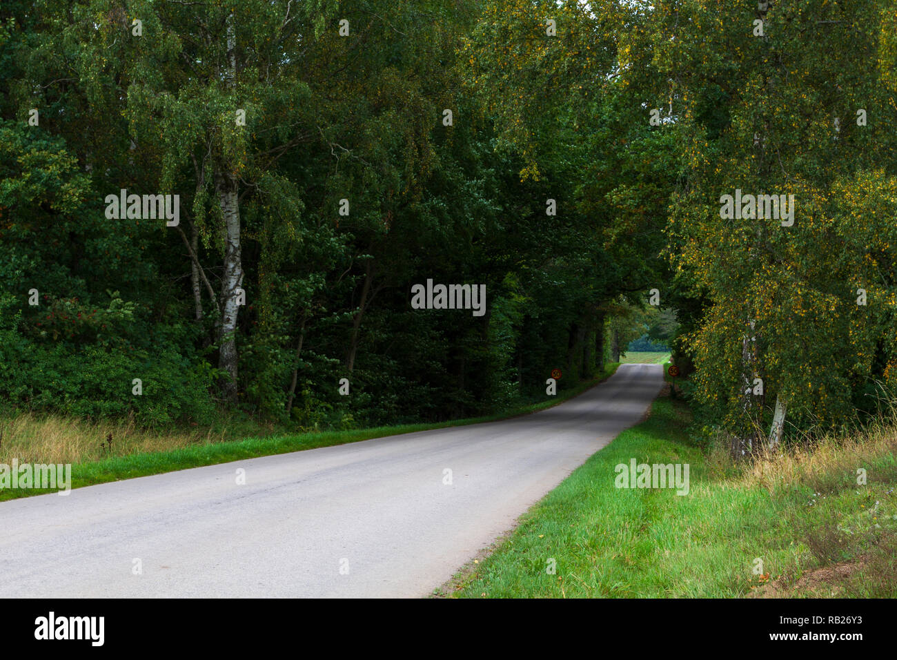 A road through deciduous forest - Stock Image