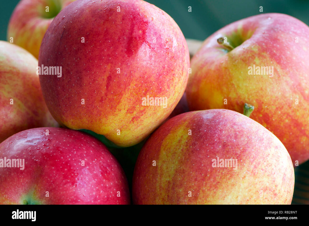 Closeup of freshly washed red and green organic apples (Malus domestica `Gala`) - Stock Image